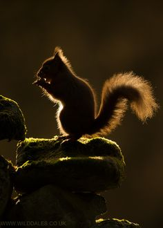 Squirrel! Photograph Ring of Fire by Simon Phillpotts