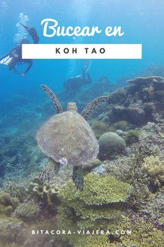 Koh Tao: el paraíso de buceo en Tailandia. Conoce todo lo que necesitas saber para disfrutar del mundo subacuático. Thailand Adventure, Thailand Travel Guide, Visit Thailand, Asia Travel, Travel Blog, Ao Nang, Scuba Diving Thailand, Timor Oriental, Backpacking Asia