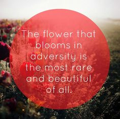 """Mulan Quote """"The flower that blooms in adversity is the most rare and beautiful of all."""""""