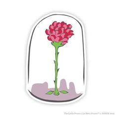 Le petite prince: It is the time you have wasted for your rose that makes your rose so important.