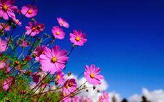 ►►♥ MIL E UMA IMAGENS♥◄◄: Belíssimas Flores