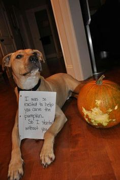 Dog Shaming features the most hilarious, most shameful, and never-before-seen doggie misdeeds. Join us by sharing in the shaming and laughing as Dog Shaming reminds us that unconditional love goes both ways. Funny Animal Memes, Dog Memes, Cute Funny Animals, Funny Animal Pictures, Dog Pictures, Funny Cute, Funny Dogs, Dog Funnies, I Love Dogs