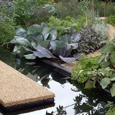 Photo Galleries – Inspiration ideas for your landscape design Landscape Design, New Zealand, Sustainability, Photo Galleries, Montessori, Plants, Gardens, Design Ideas, Album
