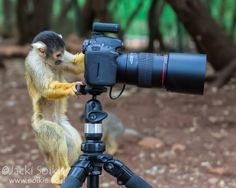 Monkey Business by Jacki Soikis on 500px