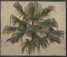 étude de palmier - carl wünnenberg (1850-1929)