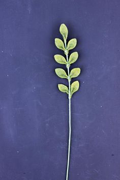 Felt Fern Foliage. Build Your Own Bouquet.