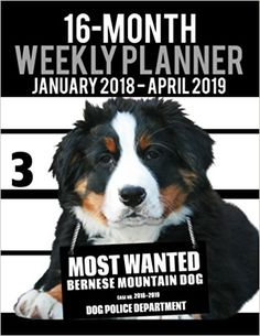"""2018-2019 Weekly Planner - Most Wanted Bernese Mountain Dog: Daily Diary Monthly Yearly Calendar Large 8.5"""" x 11"""" Schedule Journal Organizer (Dog Planners 2018-2019) 2018-2019 Weekly Planner for Dog lovers - Bernese Mountain Dog lovers in particular! Adorable Most Wanted Bernese Mountain Dog image graces the cover of this cute engagement calendar.Popular easy to use planner format shows a week-at-a-view to help keep you organized 7 days at a time."""