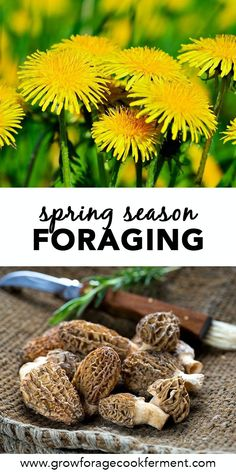 What to Forage in Spring: 20 Edible and Medicinal Plants and Fungi Spring is a great time for foraging! Learn what to forage in spring with this list of 20 edible and medicinal plants and fungi. Spring foraging is fun! Healing Herbs, Medicinal Plants, Herbal Plants, Wild Mushrooms, Stuffed Mushrooms, Edible Mushrooms, Edible Wild Plants, Survival Food, Survival Hacks