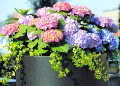If you are using a black or dark barrel vase, it is best to mix light blue…