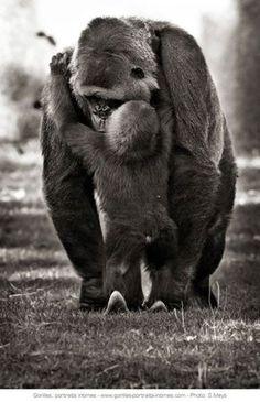© Sébastien Meys Maman gorille et son petit