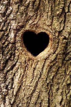 Brown | Buraun | Braun | Marrone | Brun | Marrón | Bruin | ブラウン | Colour | Texture | Pattern | Style | Heart in tree