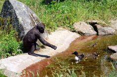 Jersey Zoo (Photo: Jersey Zoo Facebook account) Common enclosure