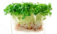 DIY Easy Healthy Guide to Sprouting