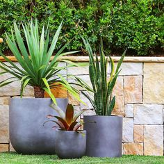 """""""Pots are a great way to add depth to your landscape, we love the way it brings out the colour of our sandstone wall , @exotic_nurseries have them ready…"""""""