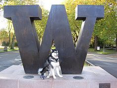 Dubs the UDUB mascot! Watch the game in The Jokester's Lounge at the Hilton Garden Inn Seattle North/Everett!