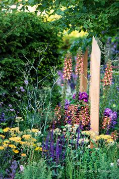Tom Simpson Garden Design Gold Medal winning garden at RHS Hampton Court Flower Show Landscape Design, Garden Design, Tom Simpson, Achillea, Firebird, Planting, Terracotta, Garden Ideas, Toms