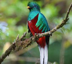 1_Quetzal-diarioecologia.jpg