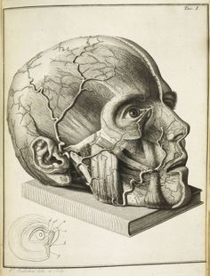 Amazing anatomical drawings from centuries ago