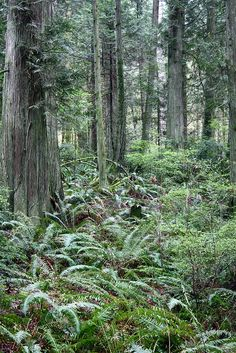 Grand Forest, Bainbridge Island, WA - we use to run thru the forests on Bainbridge - scared me as much as any spooky movie!
