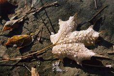 <p>Cette zone marécageuse, le marais de la Méder, est reconnue pour sa faune et saflore variées. On y aperçoit fréquemment des orignaux, des cerfs de Virginie et des oiseaux.</p>