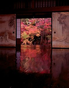 """Japanese autumn leaves Notice how nature is """"brought in"""" to Japanese architecture. It looks simple to achieve this but it isn't. Absolutely serene and beautiful. Japanese Interior, Japanese Design, Japanese Art, Japanese Style, Japanese Door, Japanese Aesthetic, Japanese Landscape, Japanese Architecture, Pavilion Architecture"""
