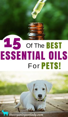 15 Of The Best Essential Oils For Pets, Aromatherapy Recipes, Essential Oil Recipes, Essential Oils For Dogs, Essential Oils For Animals Are Essential Oils Safe, Essential Oil Set, Essential Oil Diffuser Blends, Organic Essential Oils, Young Living Essential Oils, Aromatherapy For Dogs, Aromatherapy Recipes, Oils For Dogs, Dog Friends