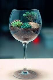 Image result for open and closed top terrariums