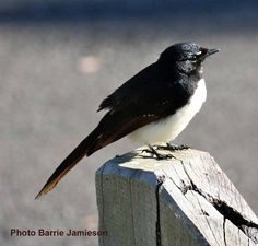 Jamieson Bird Photos