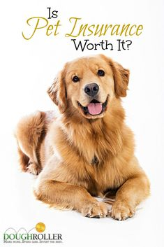 Sure you love your pet, but is pet insurance worth the cost? We take a look at the costs and benefits inside. Cat Insurance, Pet Health Insurance, Life Insurance, Insurance Benefits, Puppy Care, Dog Care, Cat Diseases, Feline Leukemia, Kitten Care