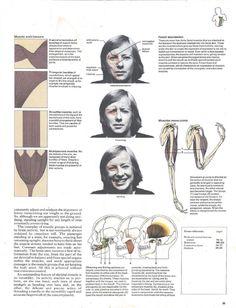 Atlas of the Body Anatomy, Movie Posters, Film Poster, Billboard, Film Posters, Artistic Anatomy