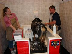 Self serve dog wash area good idea for a fund raiser as well self serve dog wash area good idea for a fund raiser as well farm store pinterest dog pet supply stores and pet supplies solutioingenieria Image collections