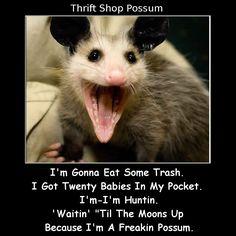 thrift shop possum.