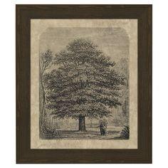 Chestnut Tree Framed Print at Joss & Main