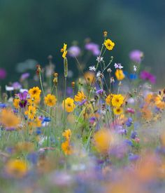 A wildflower meadow - such random perfection!