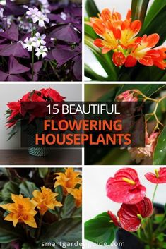 Beautiful flowering houseplants that will tolerate low light and bloom for ages. these are the best choices of flowering houseplants based on their beauty, tolerance of indoor conditions and duration of blooming.