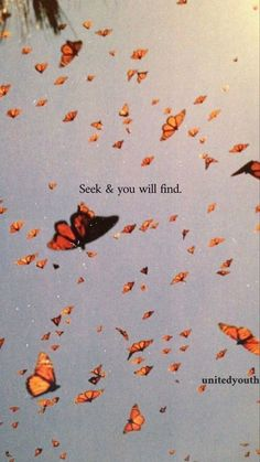 seek and you will find ( procura e acharás ) Butterfly Wallpaper Iphone, Iphone Background Wallpaper, Quote Backgrounds, Wallpaper Quotes, Motivational Wallpaper, Aesthetic Pastel Wallpaper, Aesthetic Wallpapers, Images Esthétiques, Christian Wallpaper