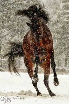Horse playing in ice #photography #fun #horse