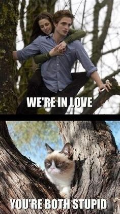 I love, love, love Grumpy Cat. Grumpy Cat meets Bella and Edward. I don't know why this is funny to me! Funny Shit, Haha Funny, Funny Cats, Funny Animals, Hilarious, Funny Stuff, Memes Humor, Cat Memes, Ridiculous Harry Potter