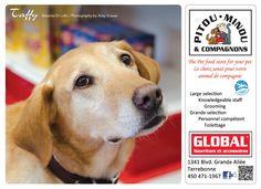 Taffy 2013 Calendar, Fundraising, Labrador Retriever, Pets, Animals, Labrador Retrievers, Animales, Animaux, Animal