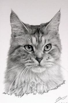 Cat Drawing by sharppower.deviantart.com on @deviantART