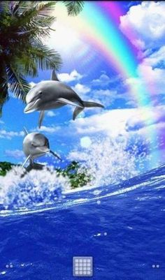 Animated Dolphins - Bing Images: