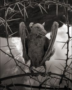 A Deadly Alkaline Lake in Africa Turns Animals into Calcified Statues. Photo by Nick Brandt.