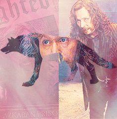 The Marauders - Sirius Black - Padfoot