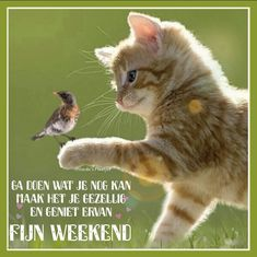 Bon Weekend, Cats, Animals, Bonjour, Gatos, Animales, Kitty Cats, Animaux, Animal Memes