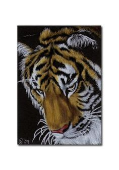 TIGER 22 portrait big cat feline pencil painting Sandrine Curtiss Art Limited Edition Print ACEO by Sandrinesgallery