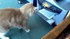 #Cat Vs The Color Printer - #funny