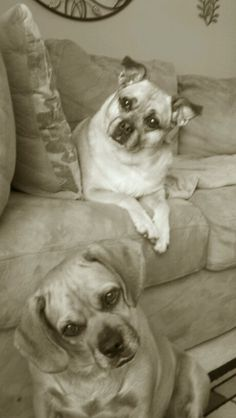 Pudgy (top) and Daisy (bottom) ... These are my furry 4 legged children
