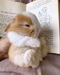 Baby Animals Super Cute, Cute Baby Bunnies, Cute Baby Dogs, Pretty Animals, Cute Little Animals, Cute Funny Animals, Animals Beautiful, Cute Cats, Baby Cats