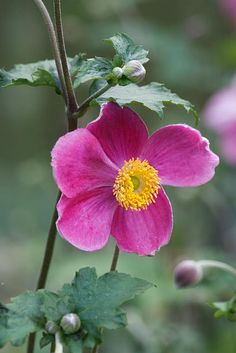 I min have . Shade Flowers, Spring Flowers, Flower Boxes, My Flower, Burford Garden Company, Japanese Anemone, Home And Garden Store, Flower Farmer, Botanical Flowers