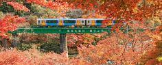 JR東日本 秋の景色